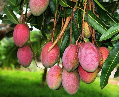 fructe10